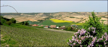 A view from Sancerre